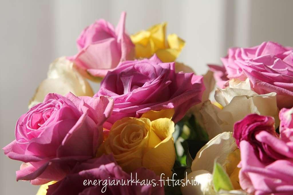 Naistenpäivän kukat avoinna auringossa.